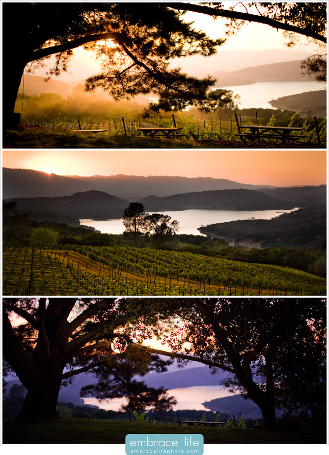 Napa Valley Wedding Photographer - 18