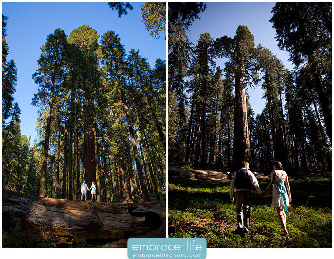 Sequoia Forest Photography - 05